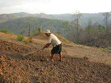 Farmer managing an Alisol